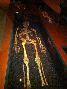 squelette-224x300